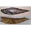 Redescription of a rare cusk eel, Pycnocraspedum ...