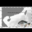 Genetic diversity of the yellowfin seabream, ...
